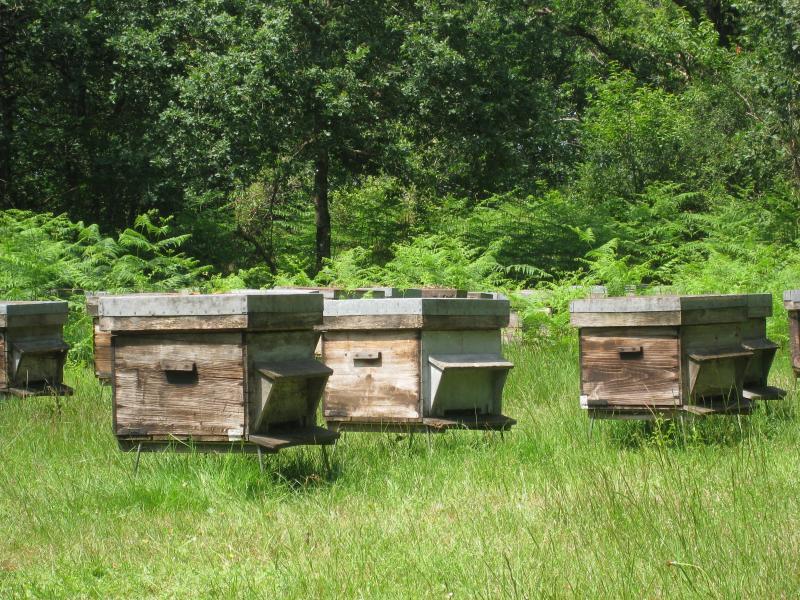 Un rucher au Veurdre